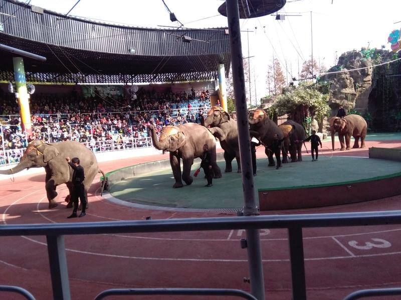 带着孩子去旅行-上海野生动物园 - 迪士尼度假区游记