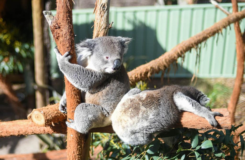 长沙到澳大利亚旅游游记:野生动物的成长天堂,孩子们的欢乐海洋