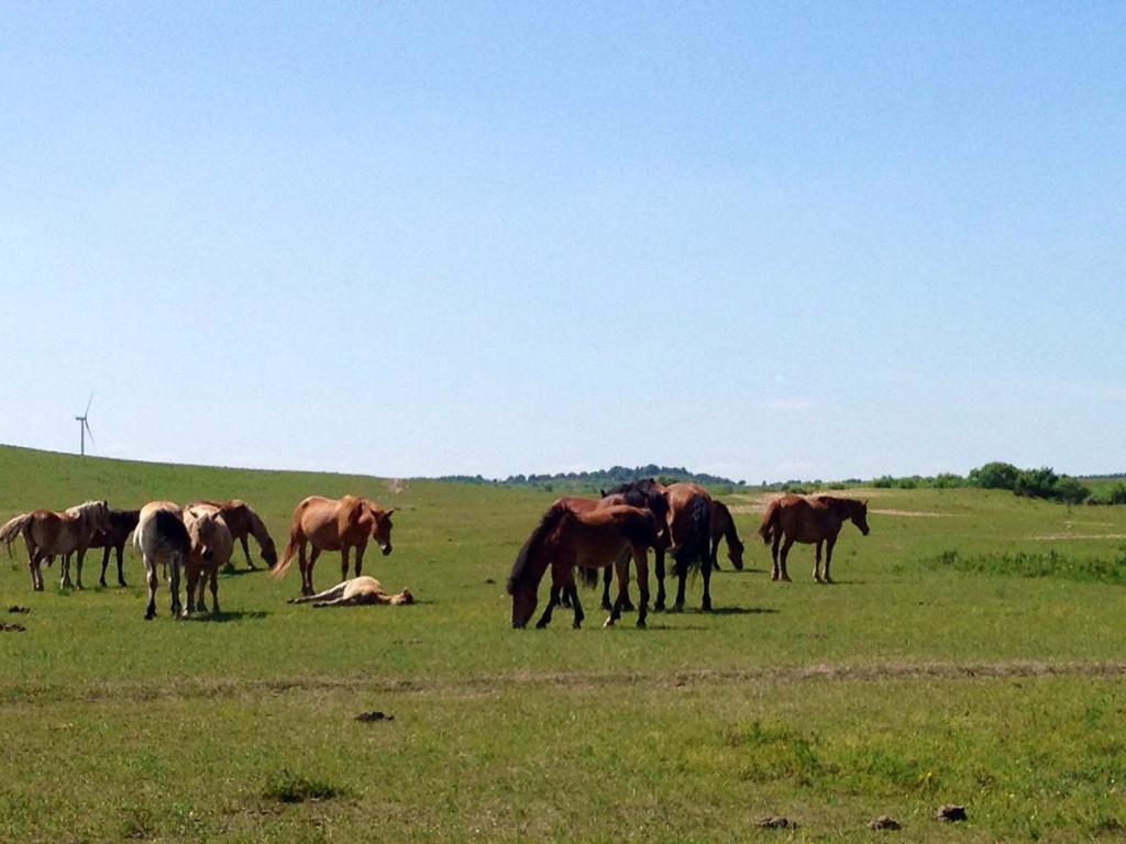 壁纸 草原 动物 马 骑马 桌面 1024_768