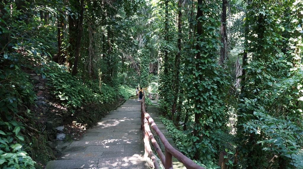 壁纸 风景 森林 桌面 1024_574